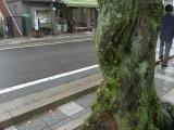 arashijama_004