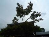 arashijama_018