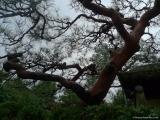 arashijama_020