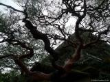 arashijama_021