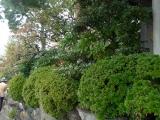 arashijama_028