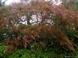 arashijama_031