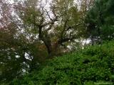 arashijama_032