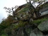 arashijama_035