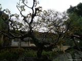 arashijama_036