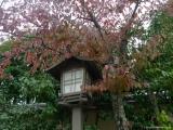 arashijama_037