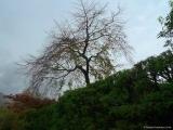 arashijama_038