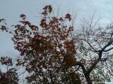 arashijama_039