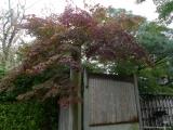 arashijama_042