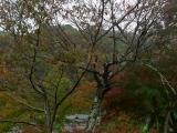 arashijama_046