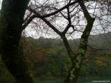 arashijama_049