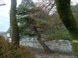 arashijama_050