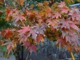 arashijama_051