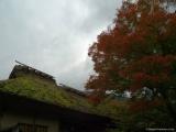 arashijama_054