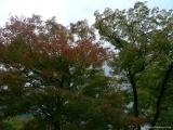arashijama_055