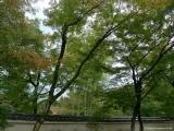 arashijama_056