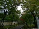 arashijama_057