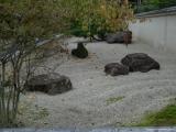 arashijama_075