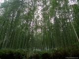 arashijama_084