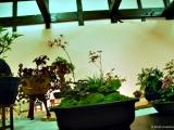bonsai_hamasaka_016