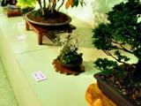 bonsai_hamasaka_017