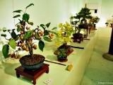 bonsai_hamasaka_019