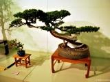 bonsai_hamasaka_020
