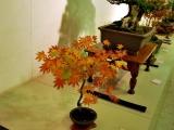 Bonsai izstāde sake muzejā Hamasakā