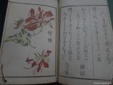 flora_un_fauna_kjoto_005