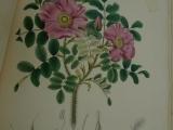 flora_un_fauna_kjoto_013