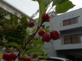 ueno_parks_vecpilseta_014