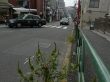 ueno_parks_vecpilseta_019