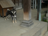 ueno_parks_vecpilseta_024