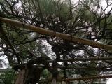 ueno_parks_vecpilseta_026