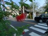 ueno_parks_vecpilseta_032