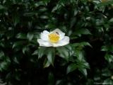 ueno_parks_vecpilseta_041