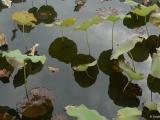 ueno_parks_vecpilseta_043