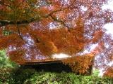rudens_japana_zaneta003