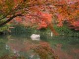 rudens_japana_zaneta006