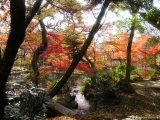rudens_japana_zaneta007